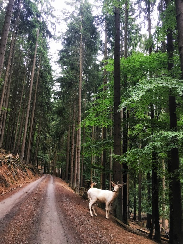 Wild- & Erlebnispark Daun, The Eifel, Germany | Moon & Honey Travel