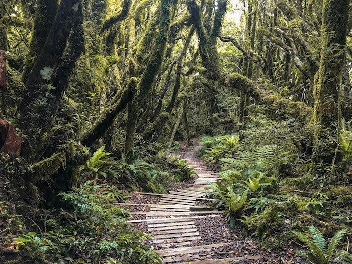 Hiking Trail in Egmont National Park