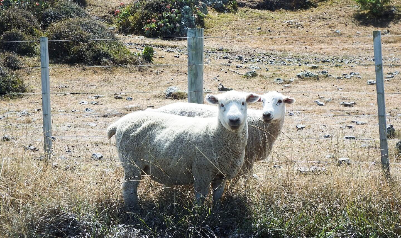 New Zealand North Island Three Week Itinerary | Moon & Honey Travel