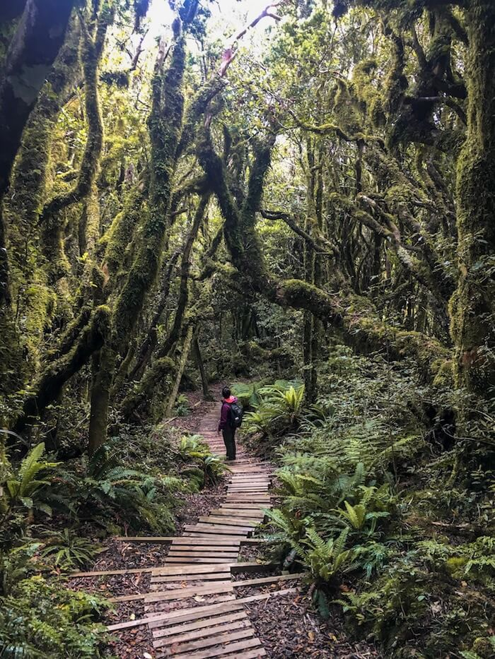 Goblin Forest, Egmont National Park, New Zealand Travel Guide | Moon & Honey Travel