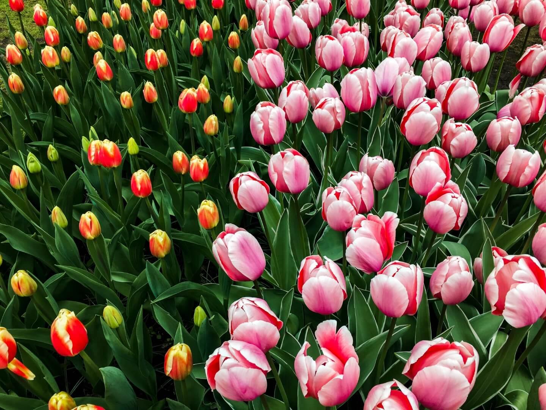 Keukenhof Garden, Things to do in Lisse, the Netherlands