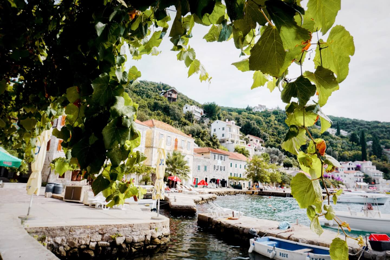 Rose, Lustica Peninsula, Montenegro