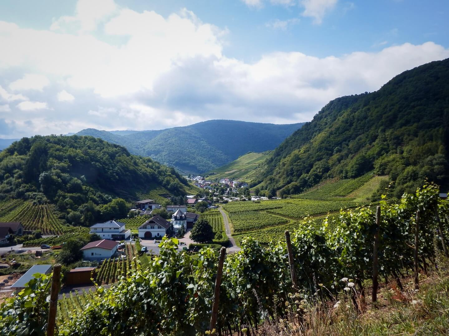 Red Wine Trail (Rotweinwanderweg), Ahr Valley, Germany