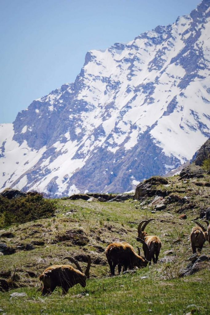 Val-di-Rhêmes, Gran Paradiso National Park, Aosta Valley, Italy