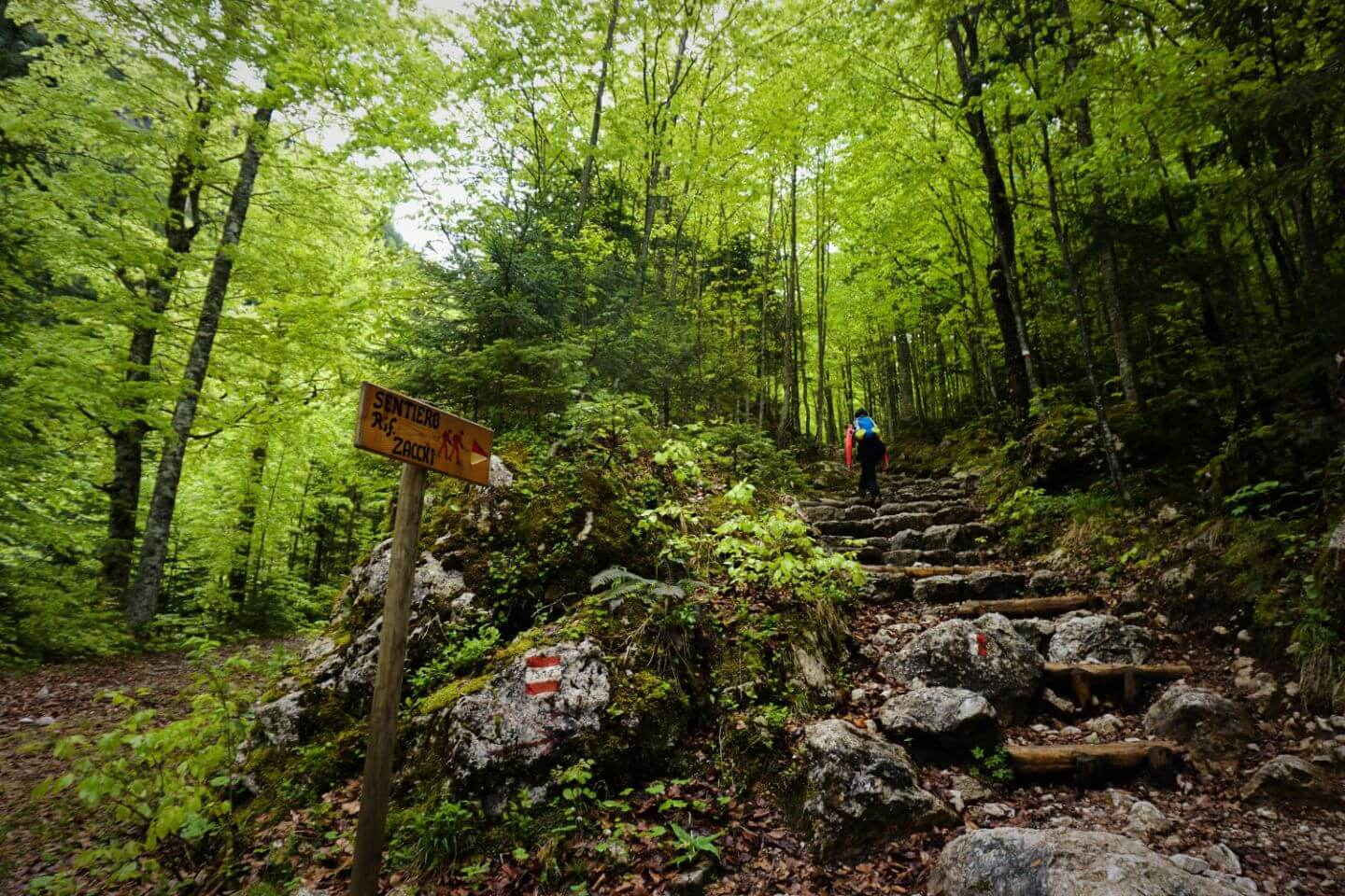 The forest trail to View from Rifugio Luigi Zacchi, Julian Alps, Italy