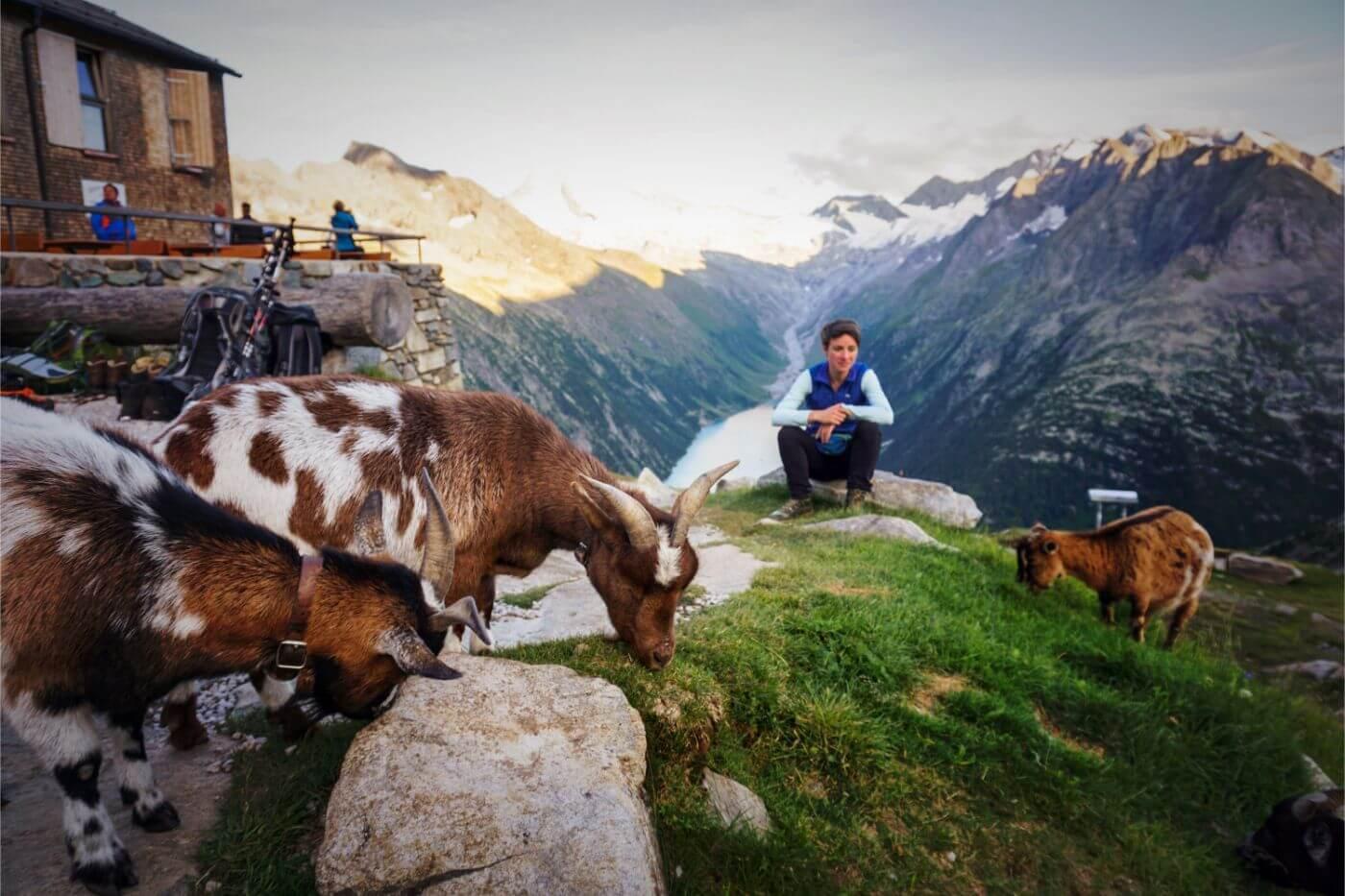 Goats at Olperer Hütte, Zillertal Alps, Austria - Berlin High Trail Packing List