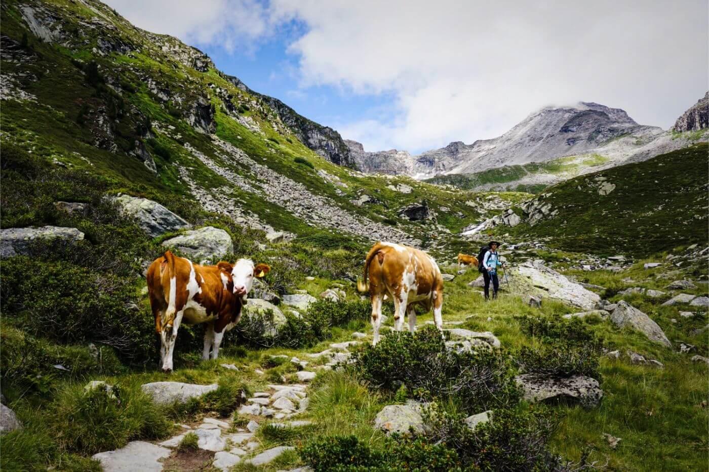 Hike to Friesenberghaus, Zillertal Alps, Austria
