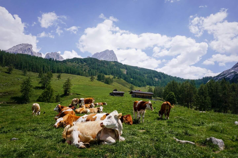 Filzmoos and the Dachstein Mountains, Austria