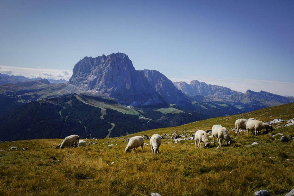 Stevia Alpine Pastures, Puez-Odle Nature Park