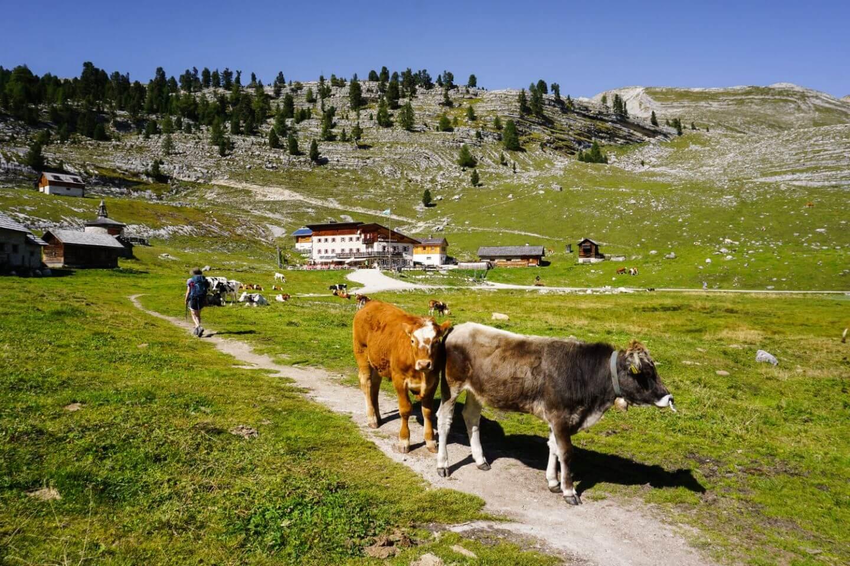 Lavarella Hütte, Dolomites Day Hike