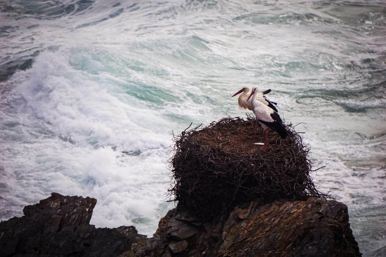 Stork's Nest, Costa Vicentina, Portugal - Fisherman's Trail