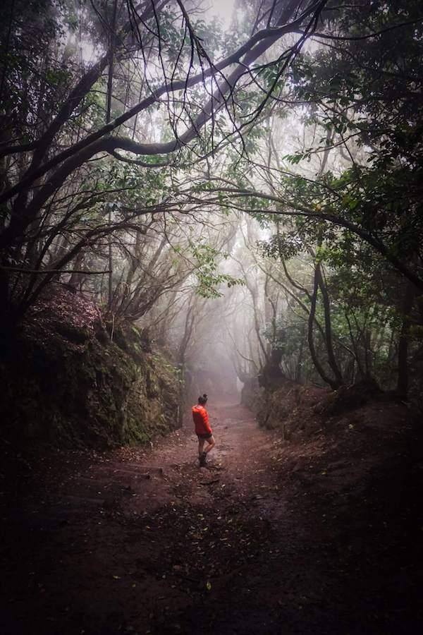 Anaga Forest, Anaga Rural Park, Tenerife, Spain