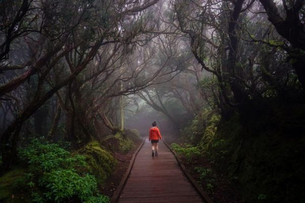 Path of the Senses Forest Walk, Cruz del Carmen, Anaga Forest, Tenerife in January