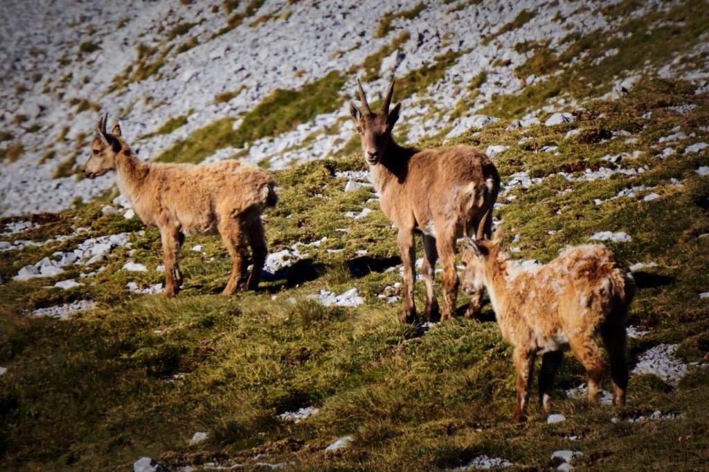 Hochschwab, Austrian Alps Hiking Trails