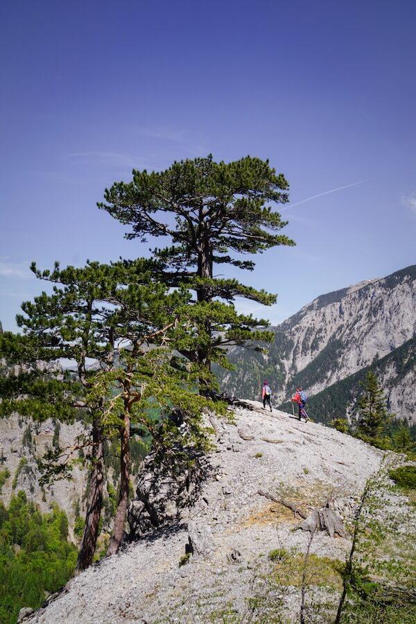 Camillo Kronichsteig, Brandschneide - Vienna Mountains