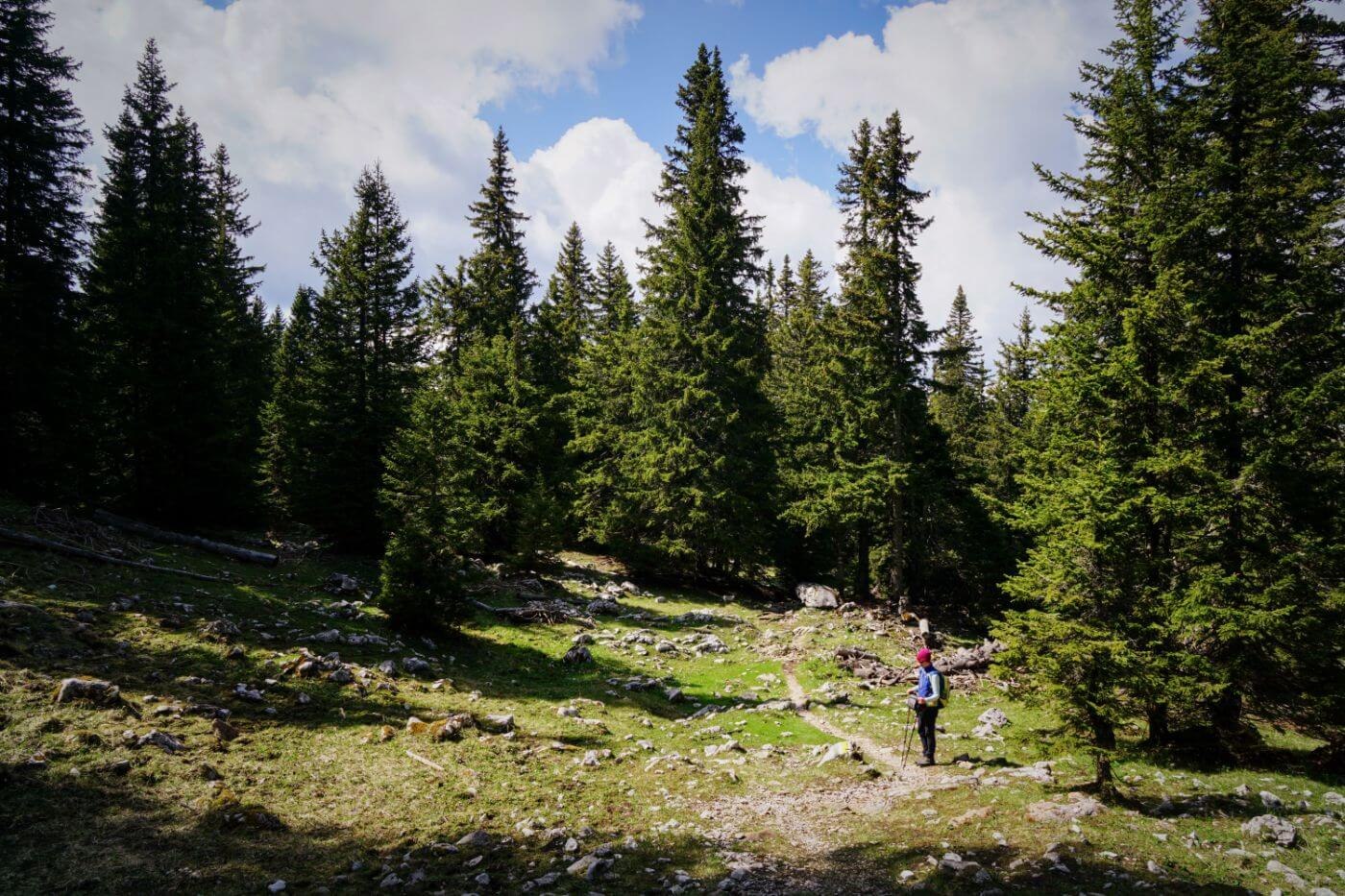 Schneeberg Day Hike, Hiking near Vienna