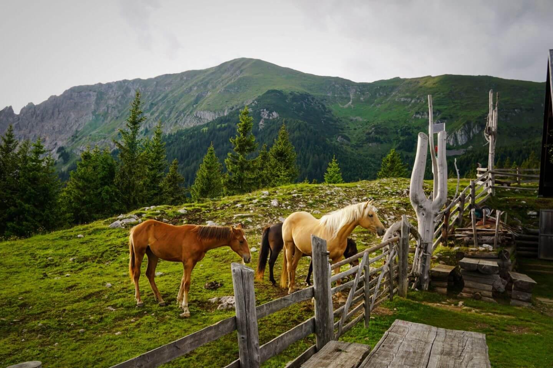 Dom Na Kofcah, Kofce Mountain Hut, Slovenia