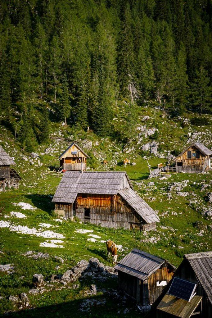 Planina Dedno Polje, Bohinj Alpine Pasture, Slovenia