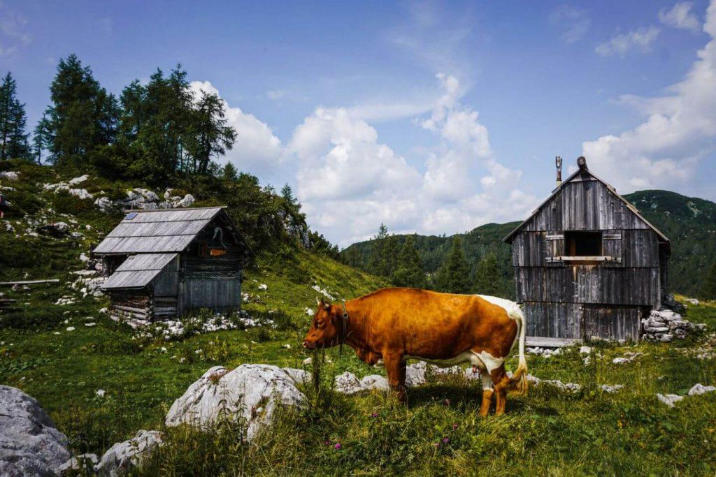 Planina Ovčarija, Triglav Lakes Valley hike