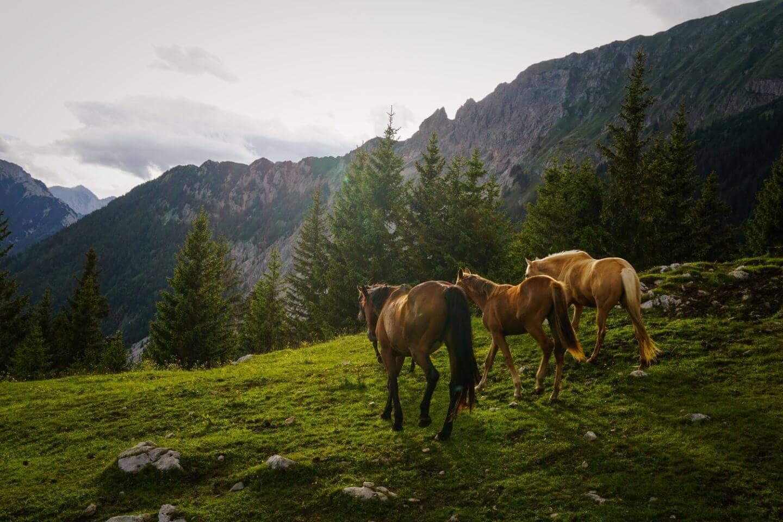 Planinski Dom Na Kofcah, Slovenia