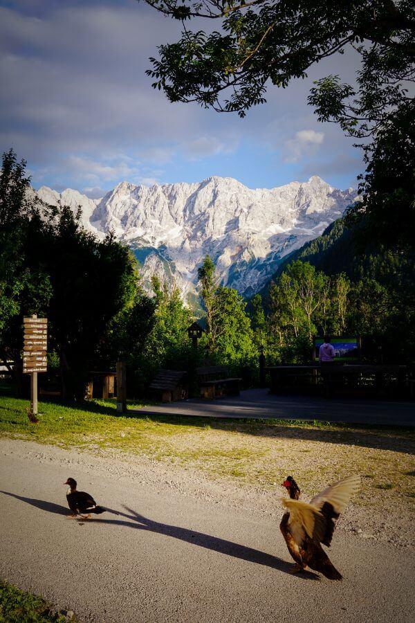 Tourist Farm Šenkova domačija, Kamnik-Savinja Alps