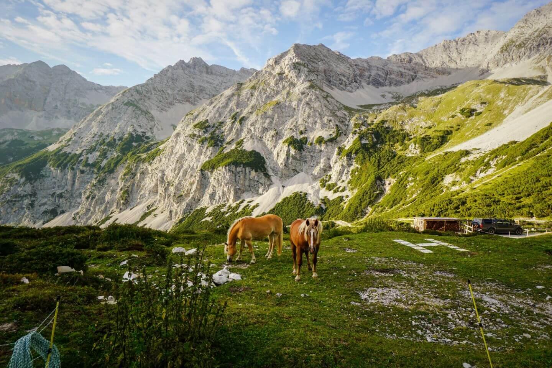 Grasende Pferde bei der Pfeishütte, Sonnenuntergang, Karwendel, Tirol