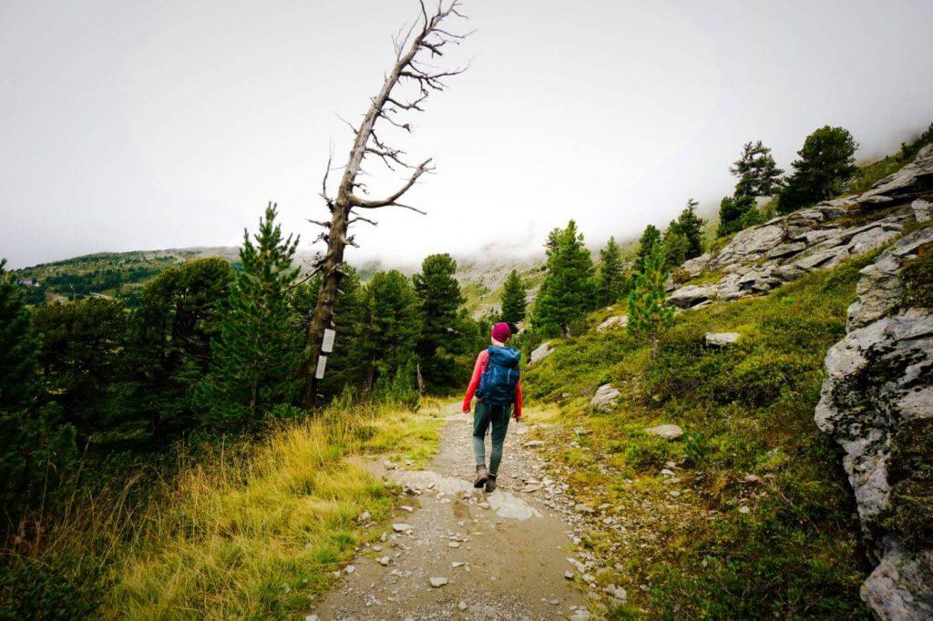 Stone Pine Path, Short Walk from Patscherkofelbahn to Glungezerbahn