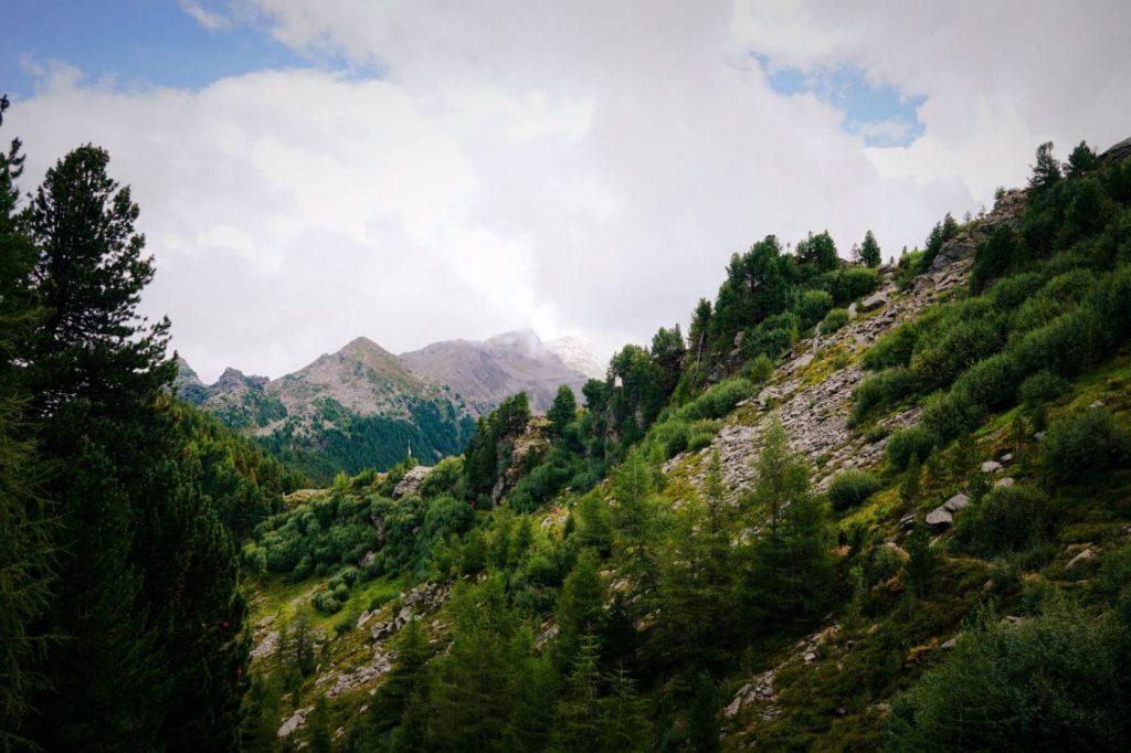 Stone Pine Trail, Easy Hike near Innsbruck