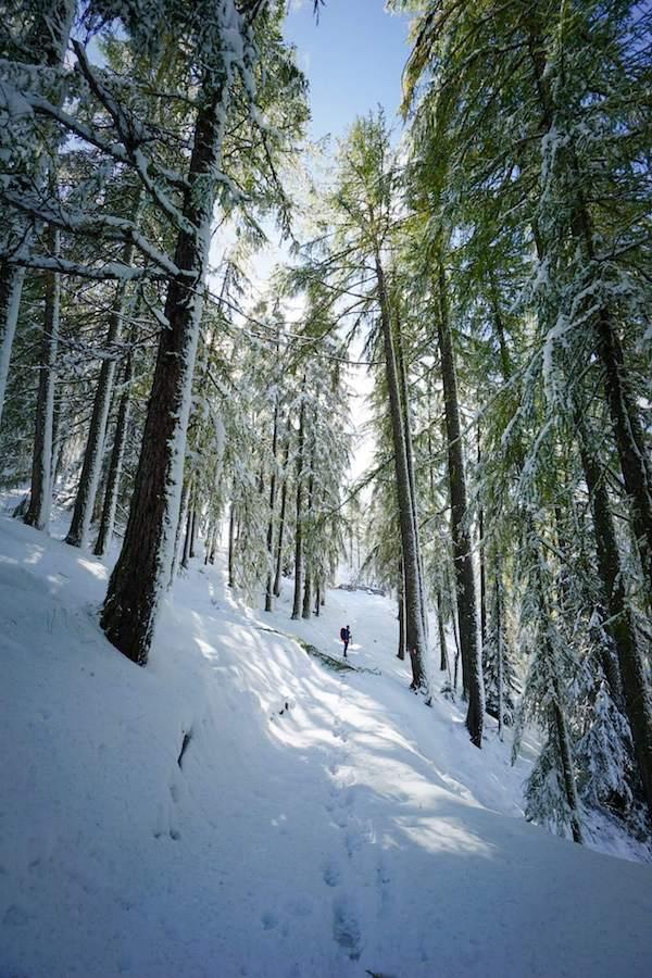 Trail of the Larches, Winter Hike in San Cassiano, Alta Badia