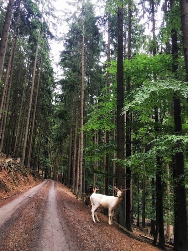 Wildlife Park in Daun in the Eifel Region, Germany