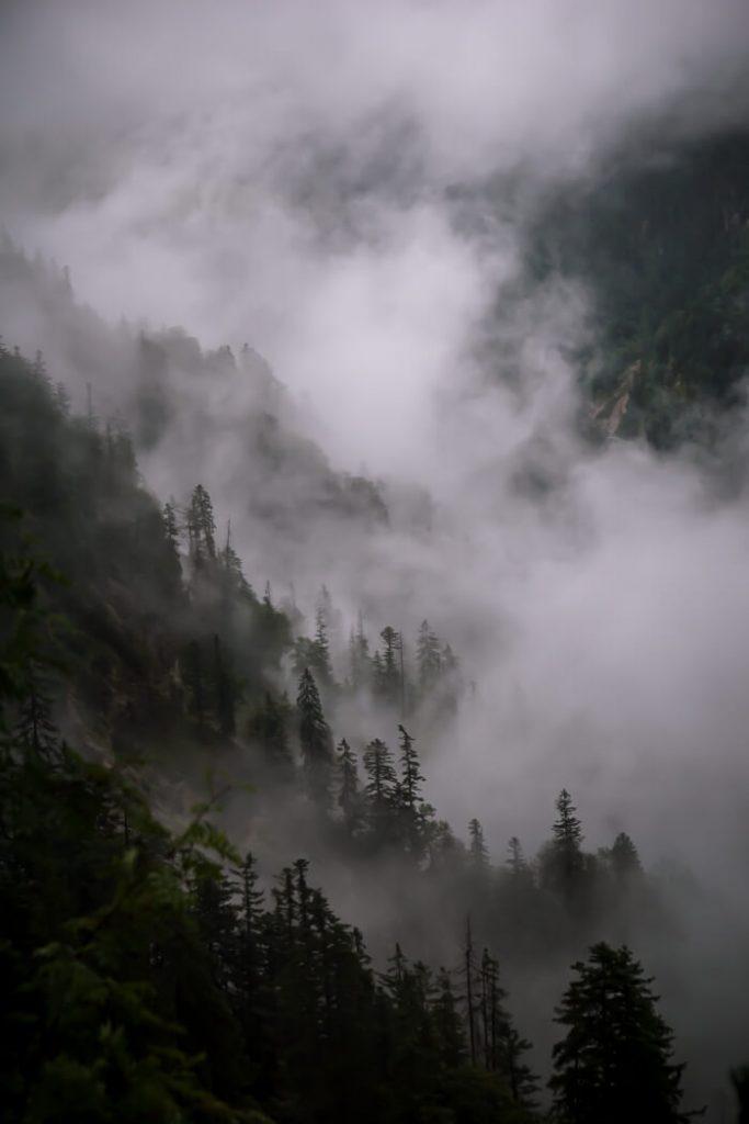 Forest, Bettlersteig Trail, Wilder Kaiser, Austria