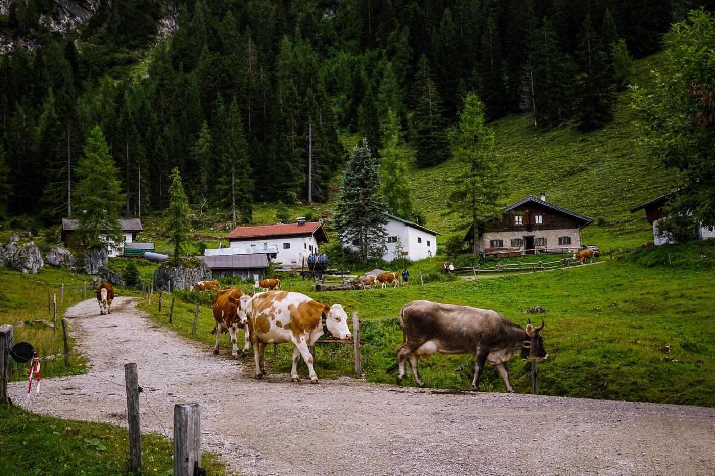 Steinbergalm, Wilder Kaiser, Austria